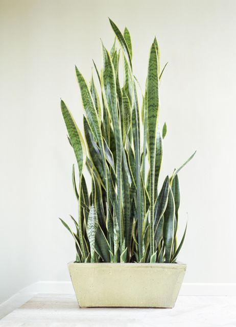 тенелюбивые комнатные растения_1