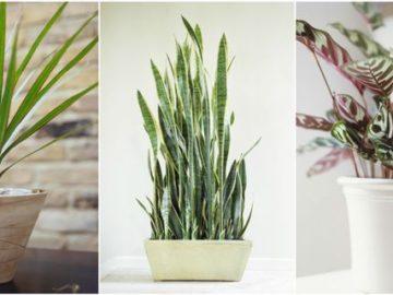 тенелюбивые комнатные растения_10