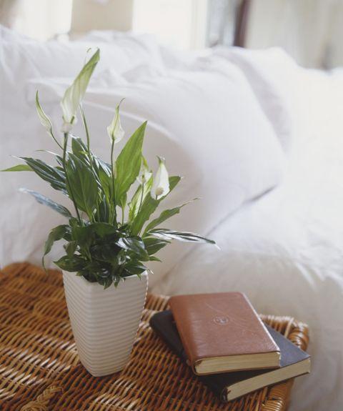 тенелюбивые комнатные растения_3