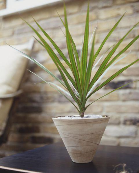 тенелюбивые комнатные растения_7