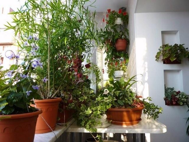 зимний сад на балконе_1