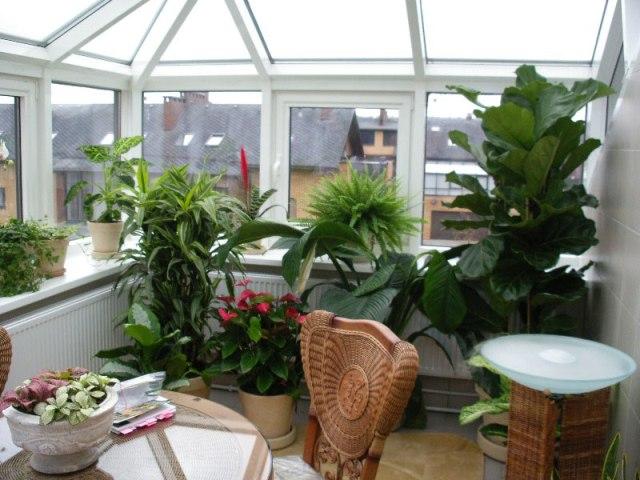 зимний сад на балконе_2