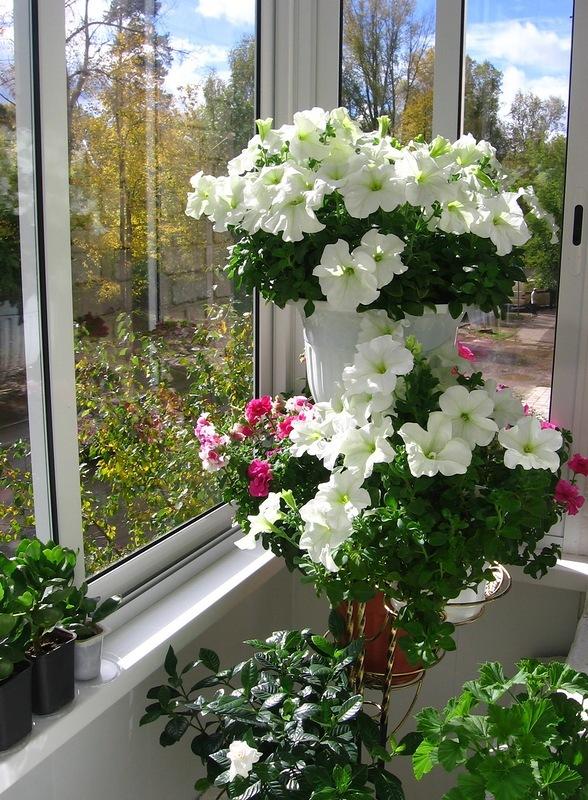 зимний сад на балконе_4